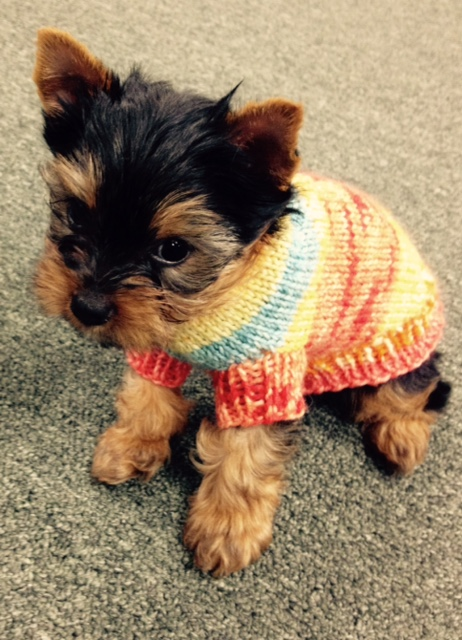 Tricots First Dog Sweater For Teacup Sizes Starla Knits