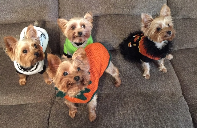 halloween sweaters all 4